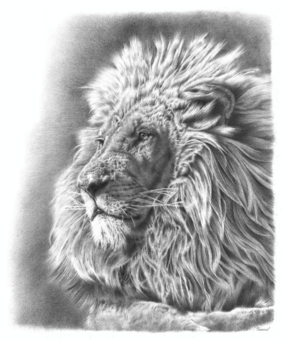 amazing pencil drawing of a lion