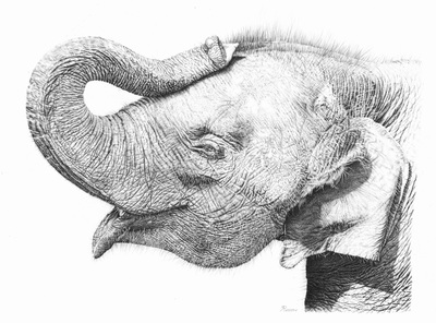 Amazing pencil drawing of an elephant