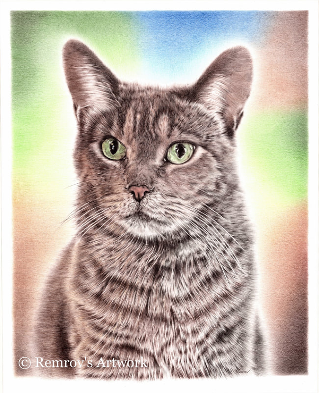 Remrov- Realistic pencil drawing of a cat