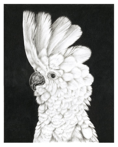 Realistic pencil drawing of a cockatoo
