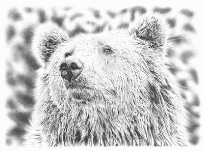 amazing realistic pencil drawing of a bear